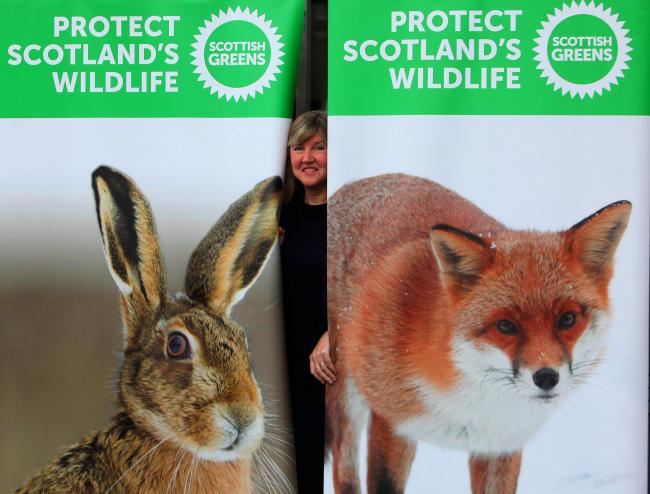 Green Party MSP Alison Johnstone launches her fox and hare bill consultation at Holyrood. Picture: Gordon Terris.