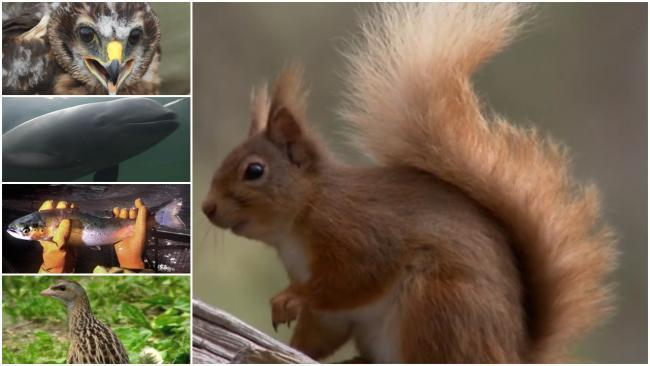 'Groundbreaking' Scots investment bond to help unlock £1bn to protect rare species and environment
