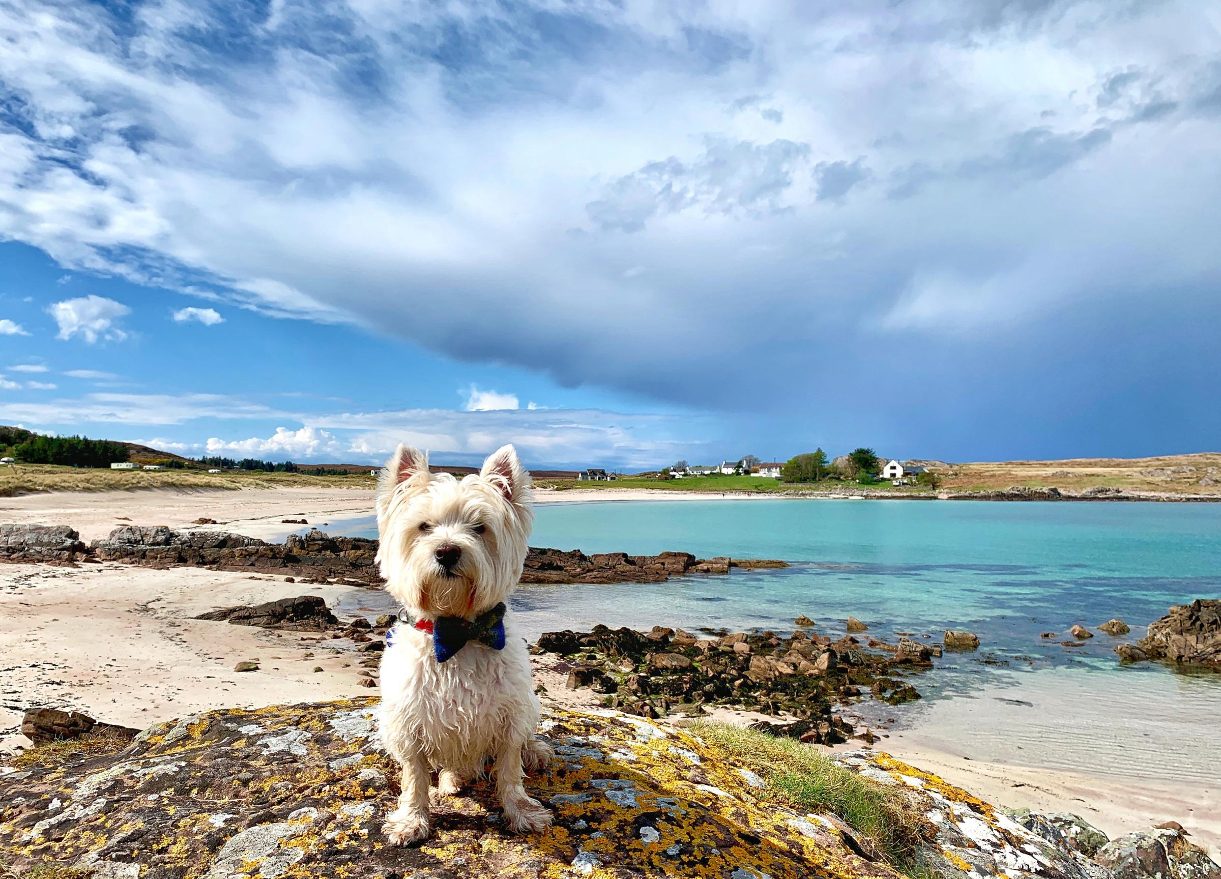 Isle Of Dugs: How Scotland welcomes our four-legged friends