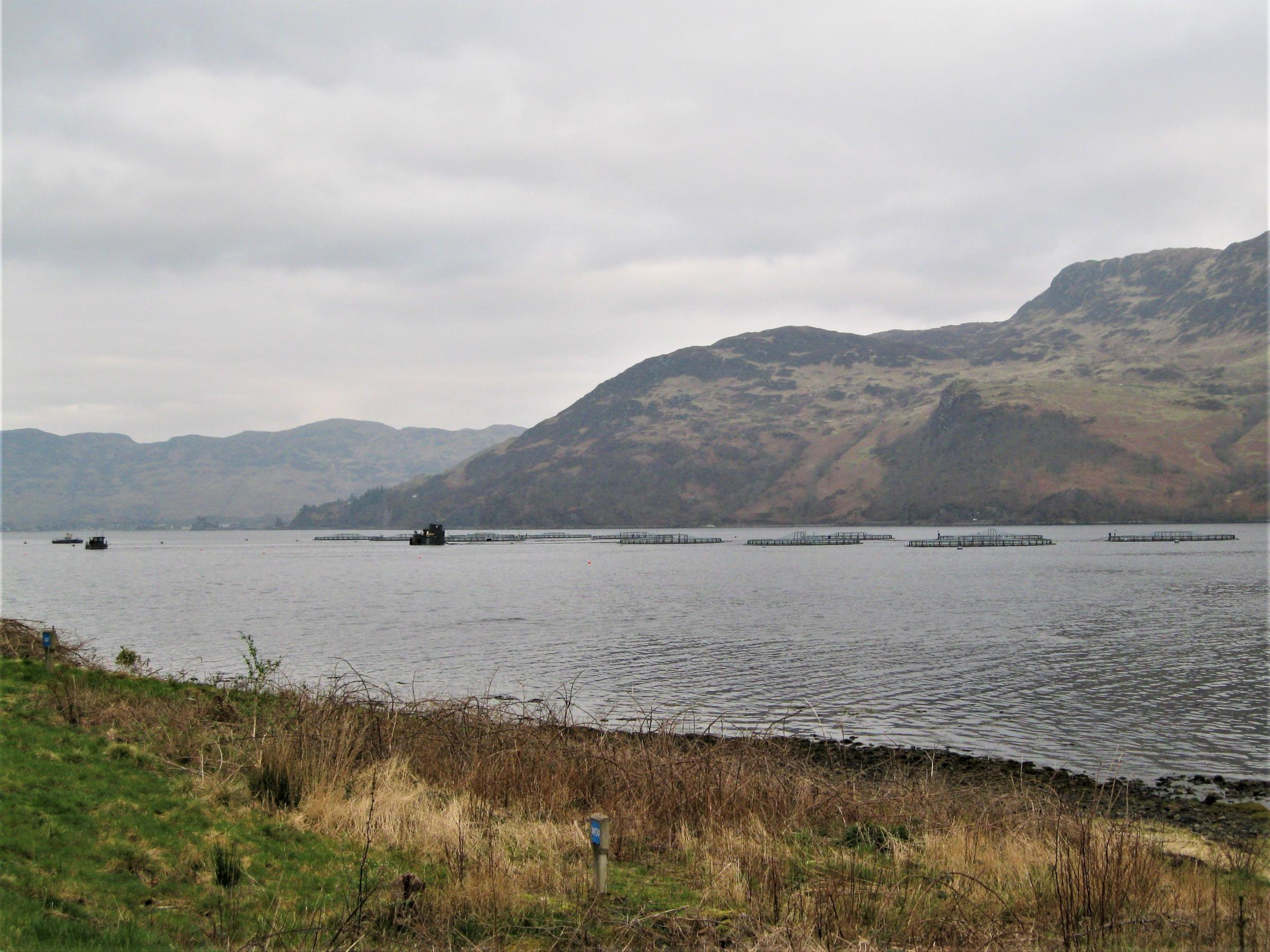 Highland salmon farms to be closed as owner aims to reduce environmental footprint