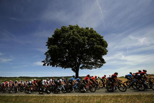 The peloton races during the 2019 Tour de France. Picture: AP Photo/Christophe Ena