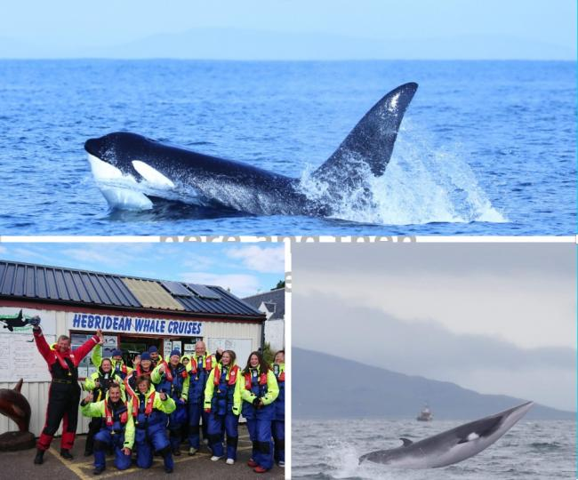 Some of the whales pictured by the team