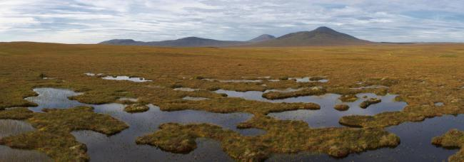 More than 80 per cent of Scotland's peatlands have been damaged