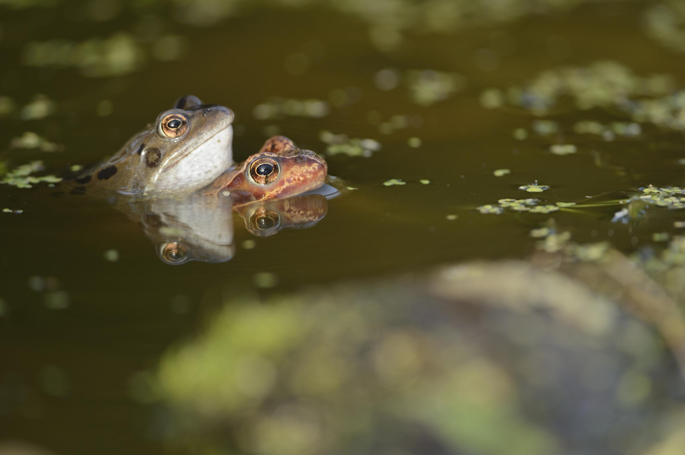 Biodiversity projects share fund to boost nature in urban areas
