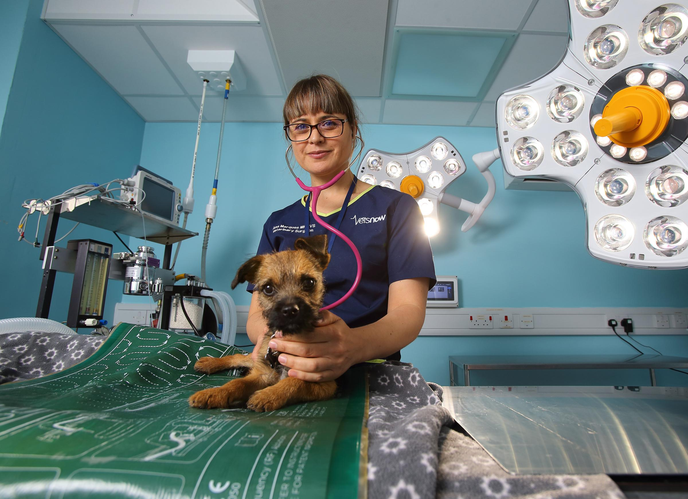 What it feels like ... to be an emergency vet