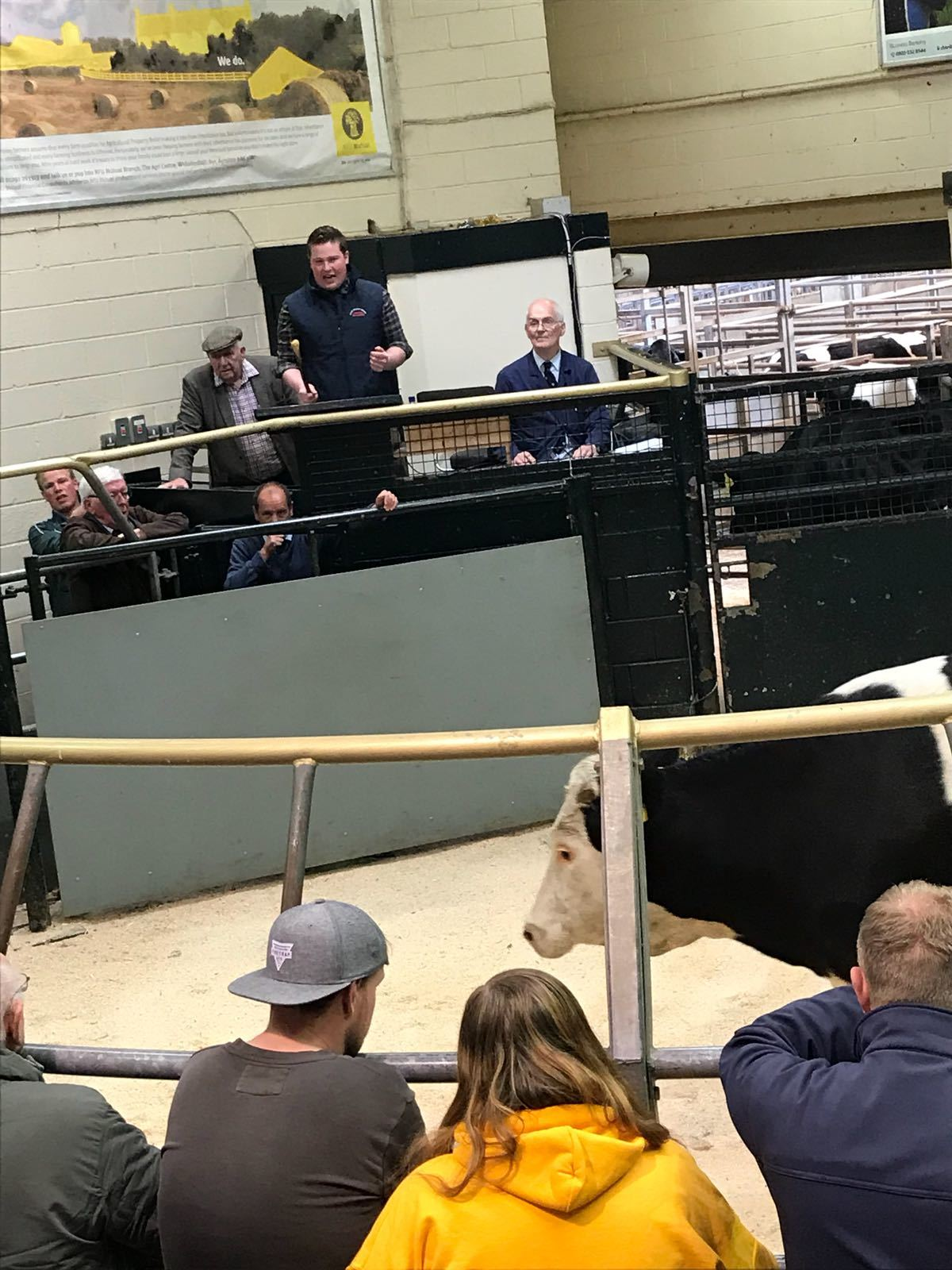 Prime heifers sell to top of 240p/kg at Ayr - HeraldScotland