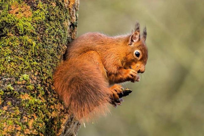 Outdoors: Five of the best places to spot red squirrels