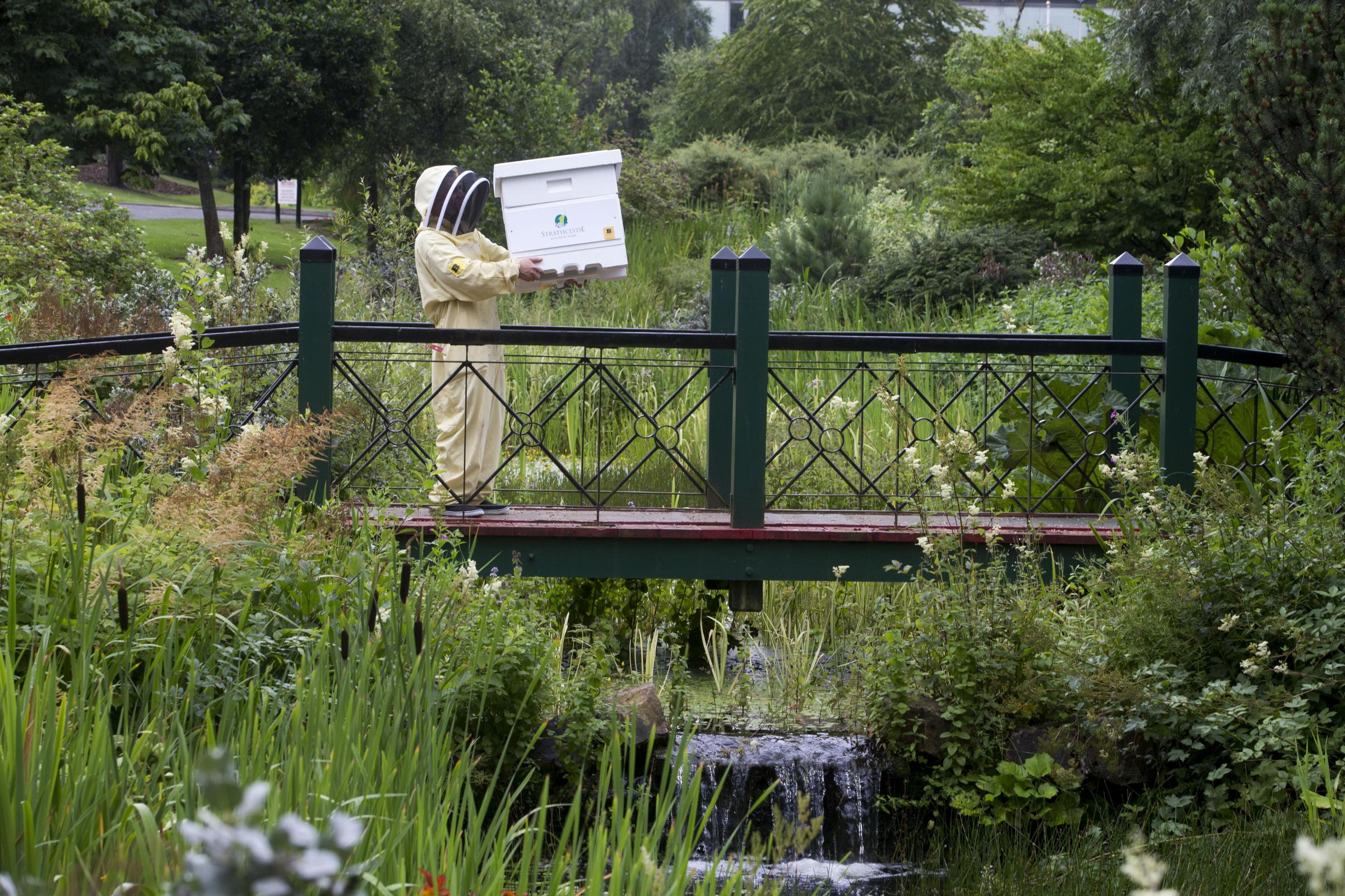 New bee hives create a buzz at Scots business hub