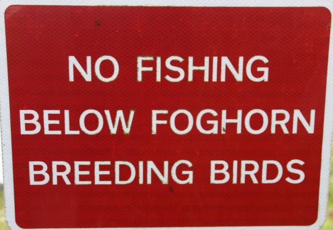 Hugh Dougherty, who spotted this sign at Mull of Galloway, admits he hasn't come across birds breeding with foghorns before.