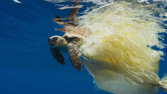 The BBC's Blue Planet II hightlighted the problem of plastic in the ocean