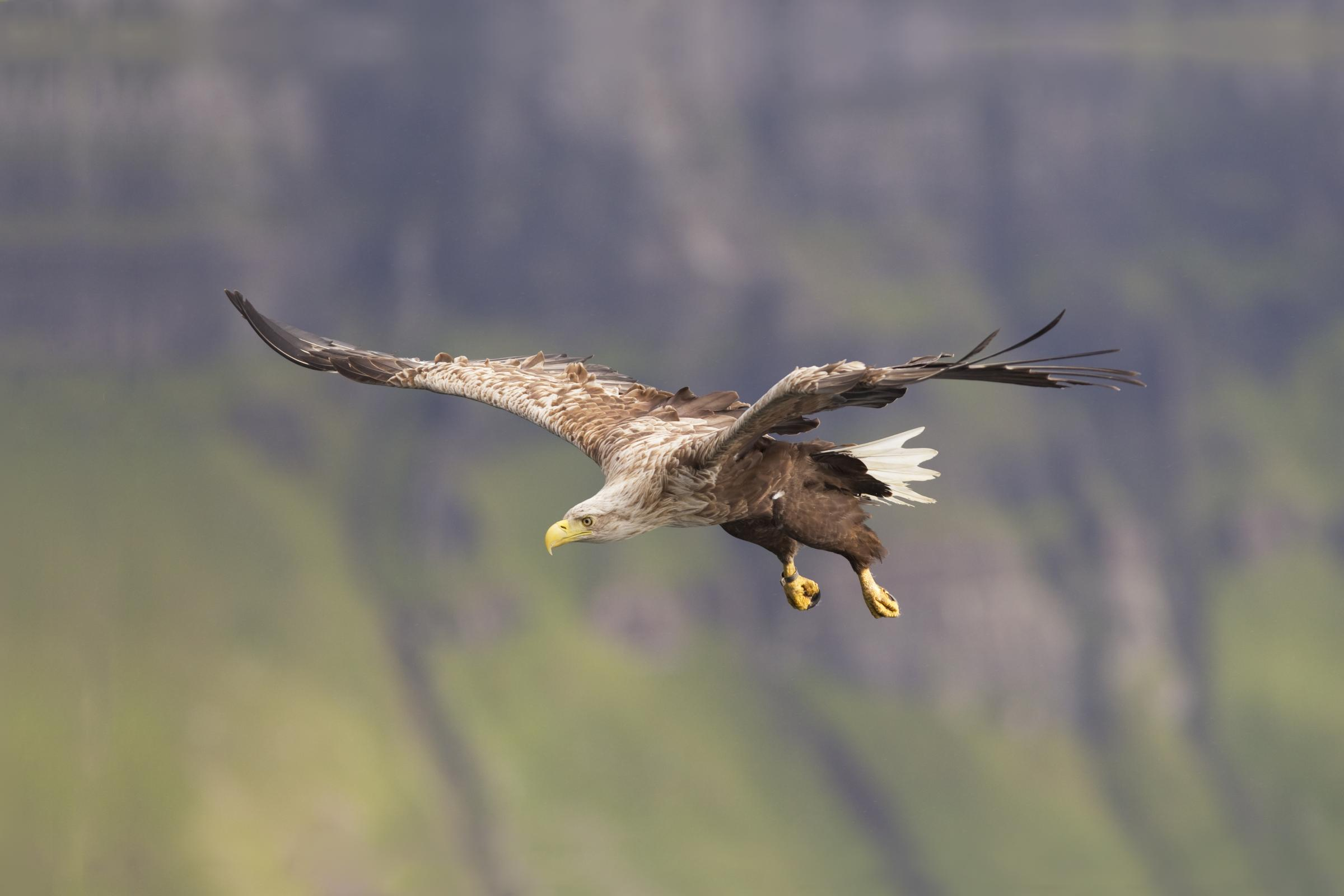 Rewilding Scotland: apex predators are a distraction in complex debate