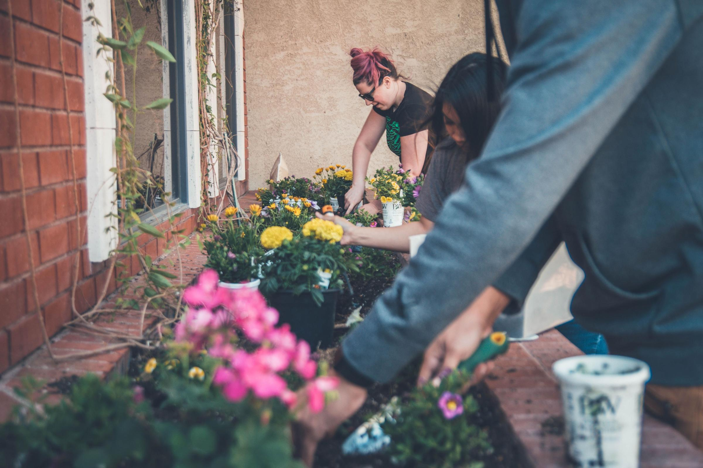The seeds of change: how gardening is saving people's lives