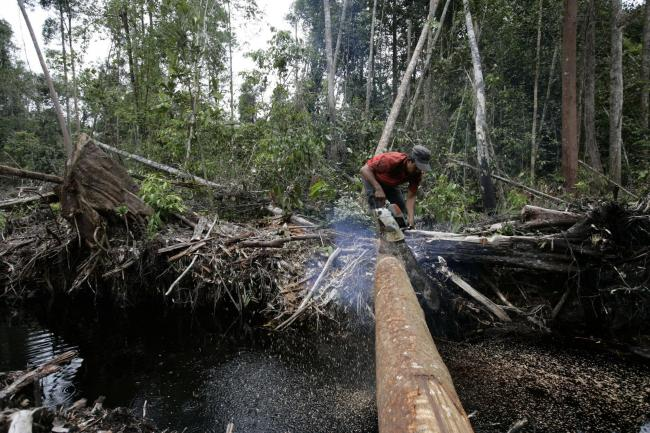 Tropical rainforests are suffering in the quest for palm oil