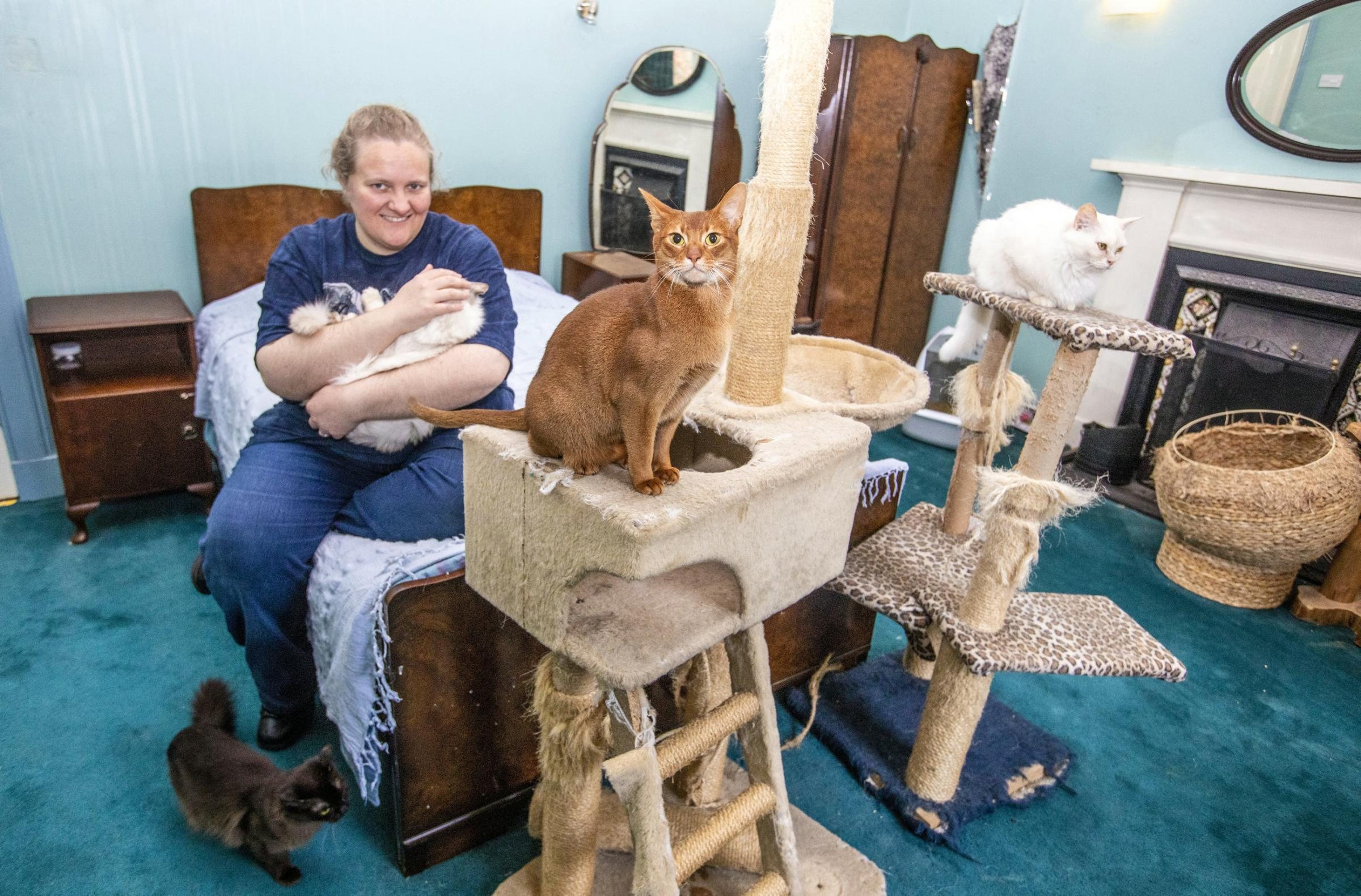 Dedication to rare cats takes breeder around the world