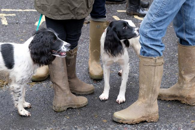 Ensuring best practice with gun dogs