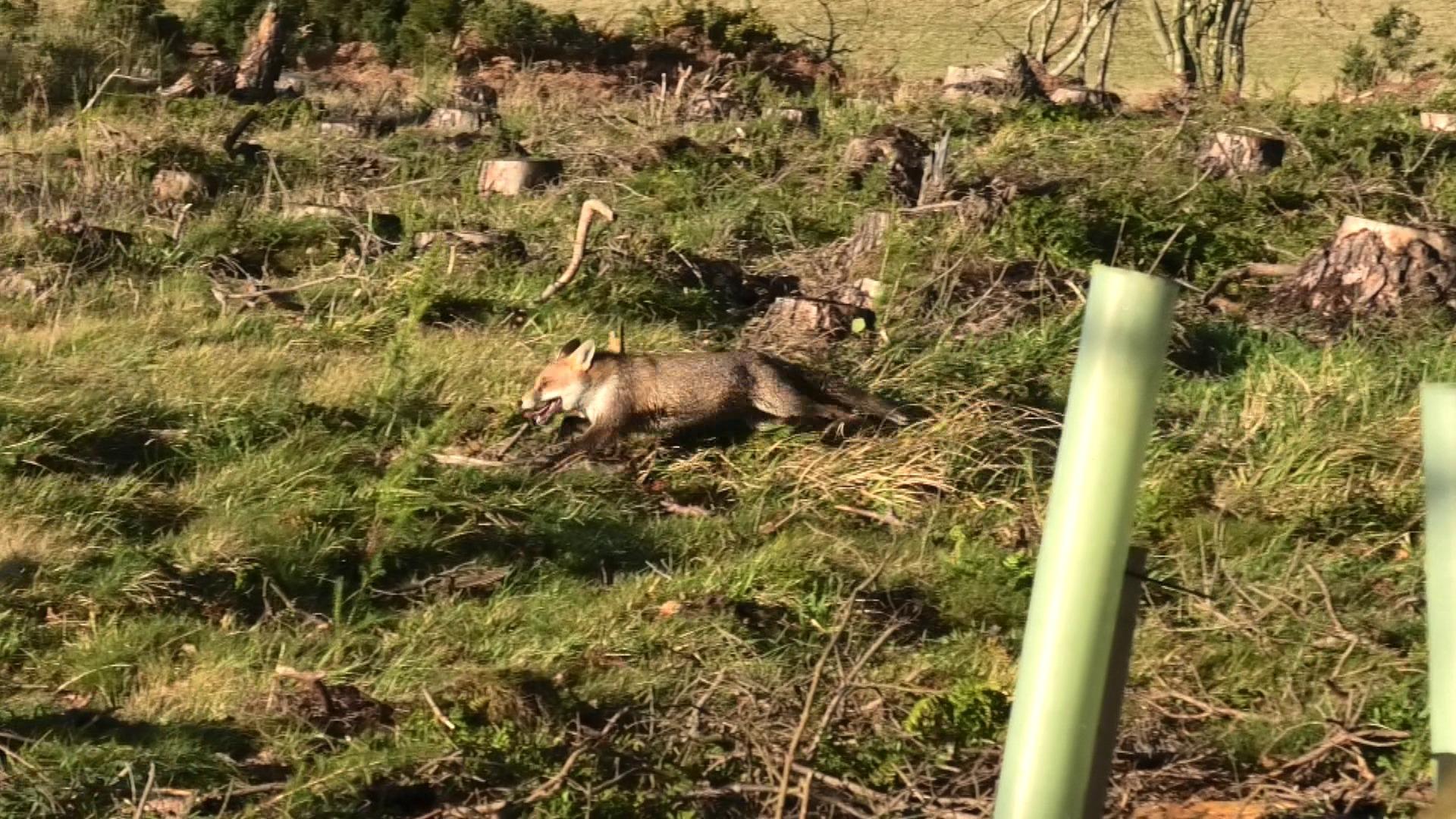 Mark Smith: Nasty, brutal and brazen: undercover on a Scottish fox hunt