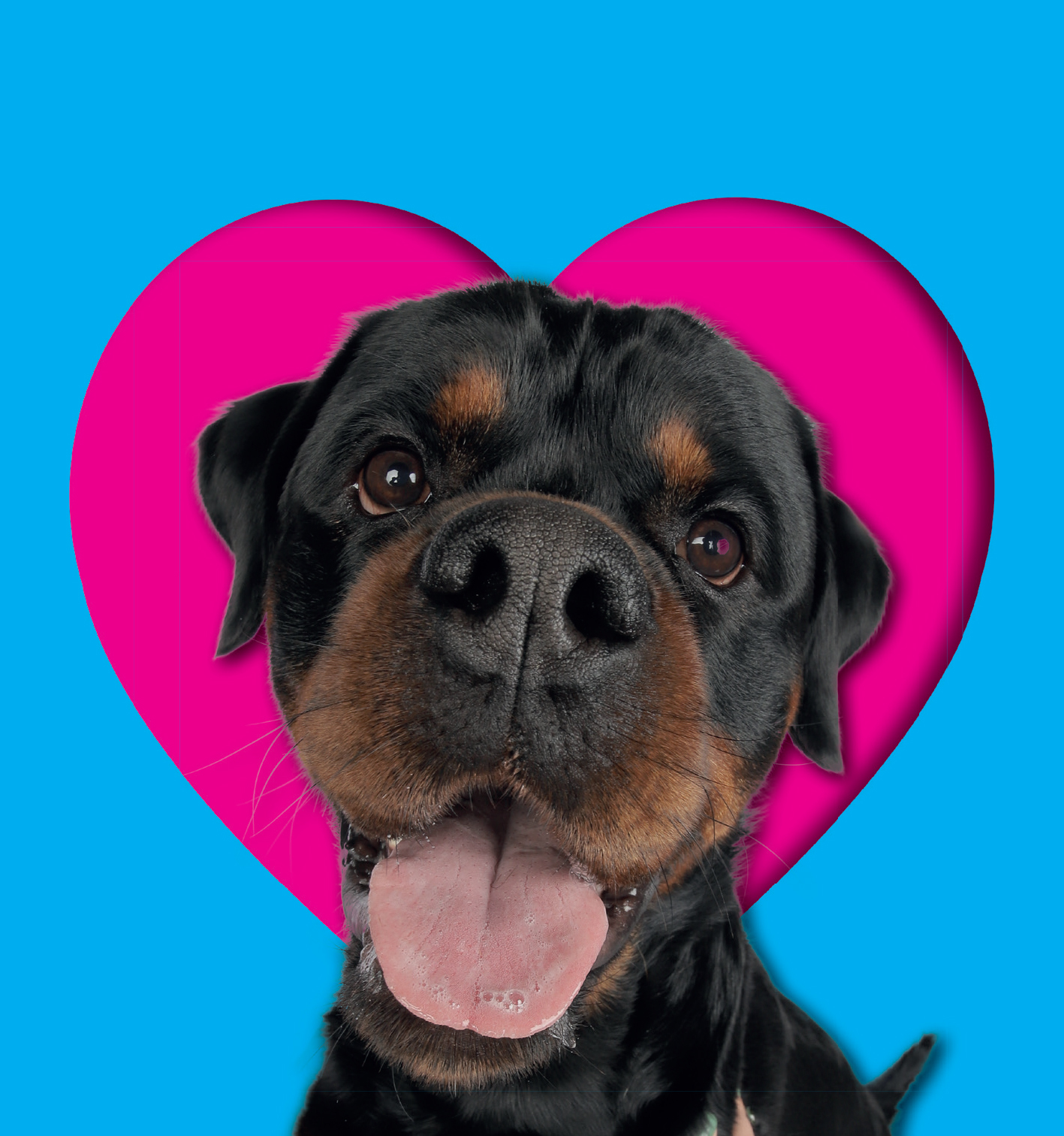 Paddy is top dog in search for face 0f The Dog Lover Show