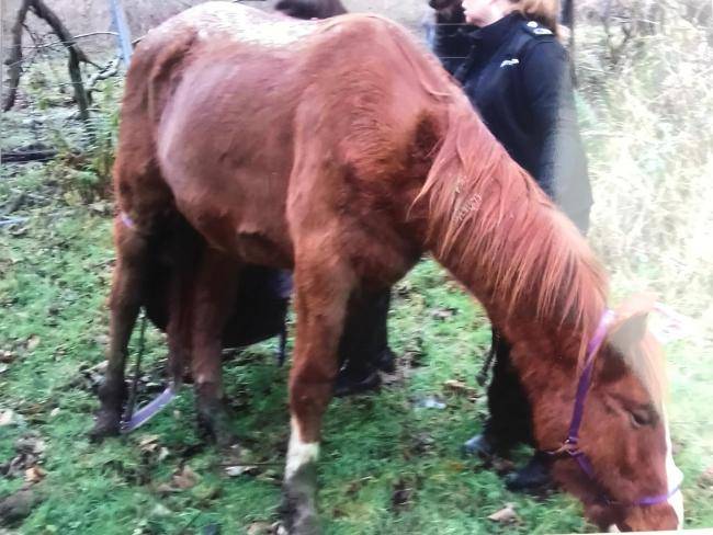 Several of the horses were found to be badly underweight.