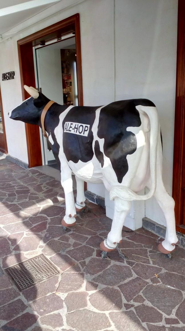 Russell Smith spotted this statue of a cow on roller skates in Tenerife. As it looks rather wobbly on wheels, he thinks it must be producing a milk shake.