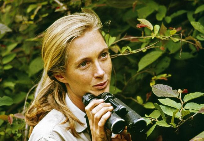 Jane Goodall in Gombe  Picture: PA Photo/Jane Goodall Institute