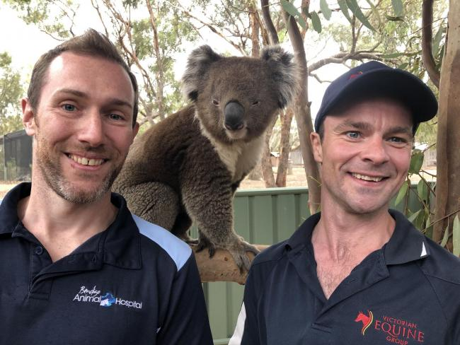 Vets Chris and Mike meet a koala - not your average veterinary client