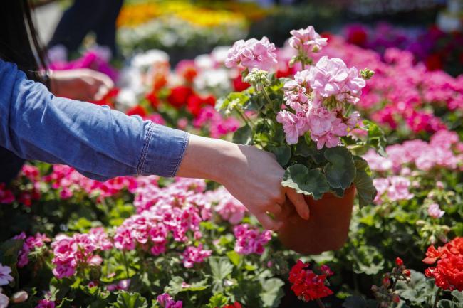 Twenty Bloomtastic Garden Centres To, Best Bedding Plants For Scotland
