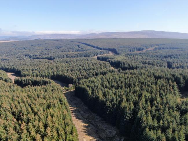 Badvoon Forest in Sutherland. Picture John Clegg & Co
