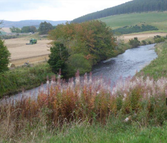 Owners set to help wildlife after buying £11m Aberdeenshire estate