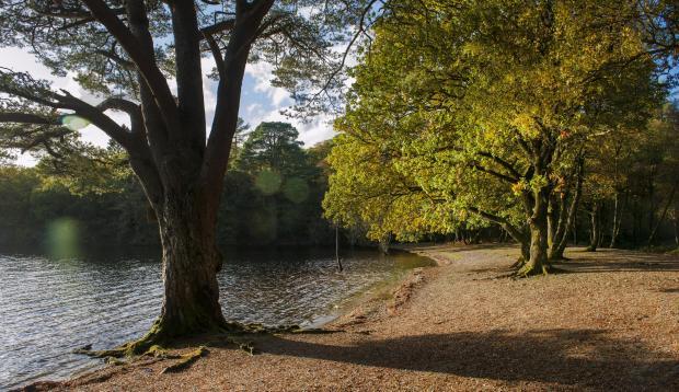 Buy a Scottish island: Iconic Loch Lomond Inchconnachan Island ...