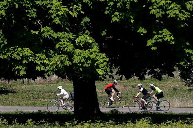 Cyclists in Richmond Park