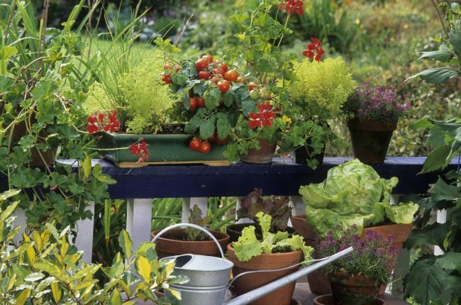 A balcony with tomatoes and other edibles