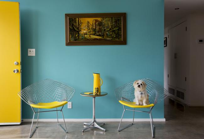 Jimmy, a Jack Russell/Shih Tzu mix in a home designed by architect Donald Wexler in 1960. Photograph © Nancy Baron