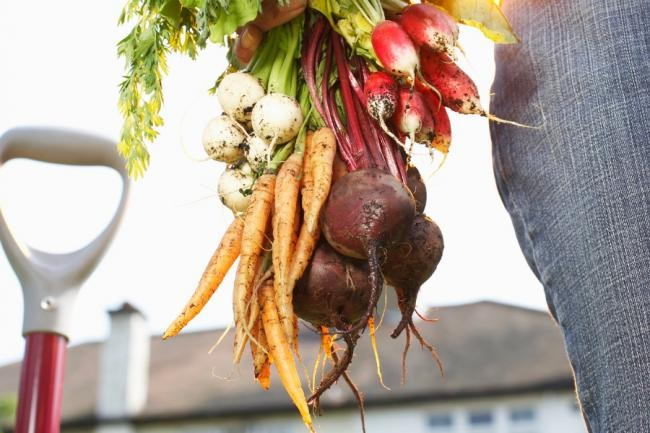 Growing beetroot and other veg. Picture: Getty