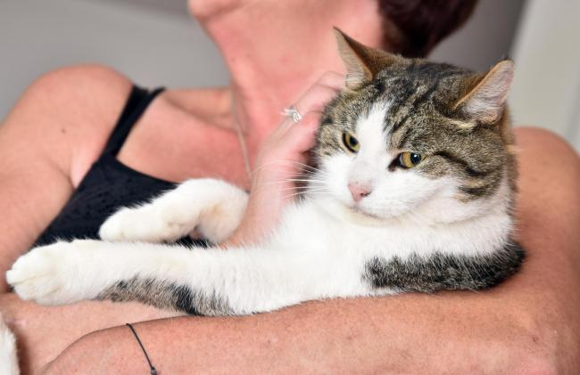 Researchers believe their findings could help strengthen the bond  between cats and their owners