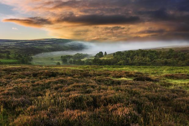 Dawn mist over the North York Moors national park shot in autumn (fall) when the heather is in full bloom near the village of Goathland, north Yorkshire, UK..