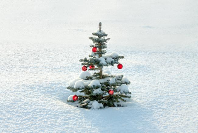winter landscape with Christmas fir tree decoration red ball and snow. holiday new year.
