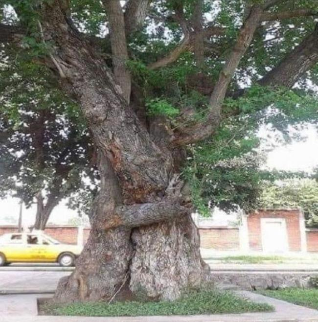 ": Charlie Bell from Edinburgh initially thought it was very cute that these two trees appear to be hugging. Though after a moment's thought he became rather annoyed. ""Haven't plant-based life forms heard of social distancing?"" he s"