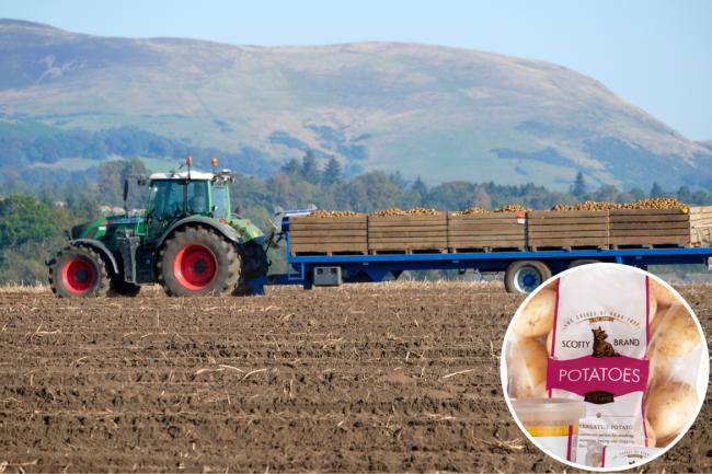 Scottish potato firm cuts 27 tonnes of plastic from its packaging
