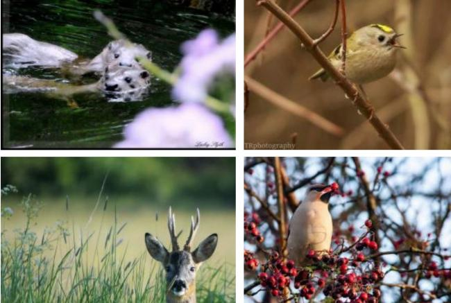 Otters, goosanders, deer. 20 wild things to spot in the lockdown city