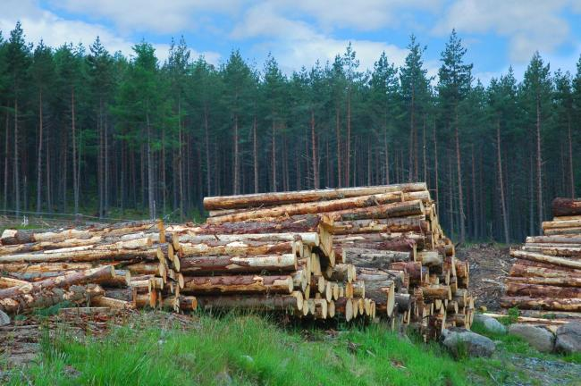 Increasing Scottish timber in construction will create green jobs for the country
