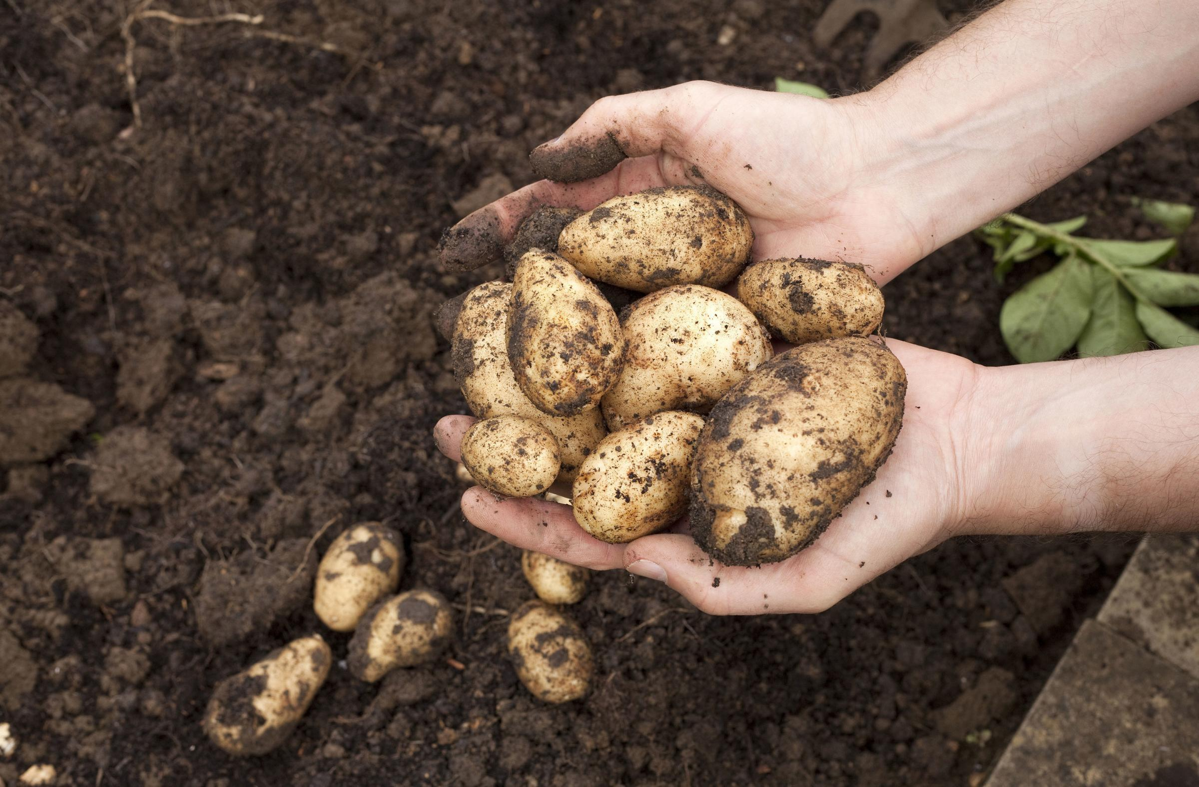 £1.1m spent by ministers on 'misguided' Scots climate change food initiative - HeraldScotland