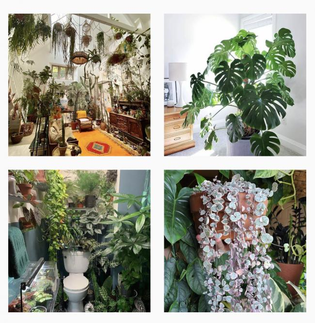 House plants are a huge Instagram trend with millions of posts during the pandemic