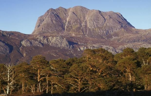 HeraldScotland: Slioch and Glen Grudie pines, in the Beinn Eighe National Nature Reserve, Wester Ross (Pic:SNH)