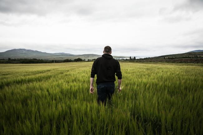 Barley fields utilised by Bruichladdich will benefit from new farming techniques with the aim of meeting Scotland's net zero targets