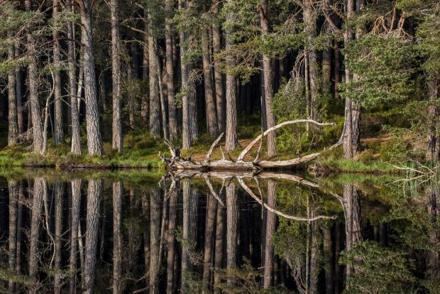 HeraldScotland: More than 1.5 million trees are to be planted in the Cairngorms National Park as part of a woodland and peatland restoration scheme.