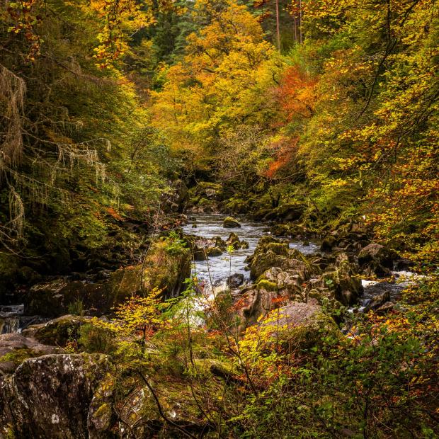 HeraldScotland: The autumn colours at The Hermitage on the River Braan near Dunkeld in Perthshire. Picture: Getty