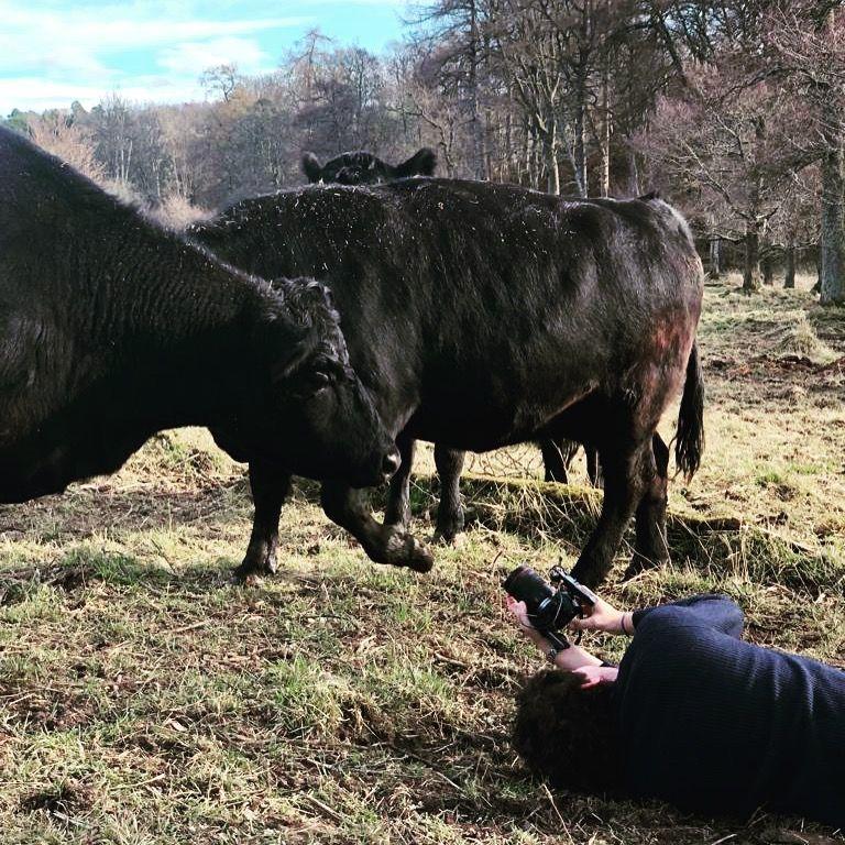Pasangan yang menyelamatkan seekor sapi Skotlandia berkembang biak dari kepunahan untuk membintangi Netflix