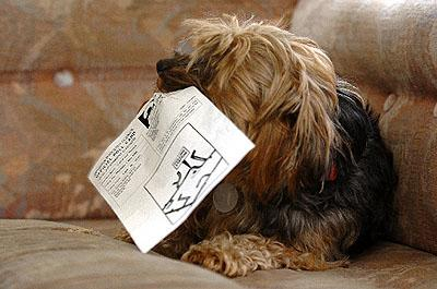 HeraldScotland: Dogs are not eligible to vote in general elections.