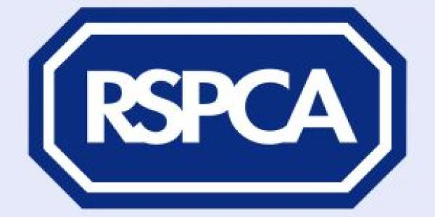 "HeraldScotland: Animal welfare charity the RSPCA this week unveiled what it described as a ""catalogue of cruelty""."