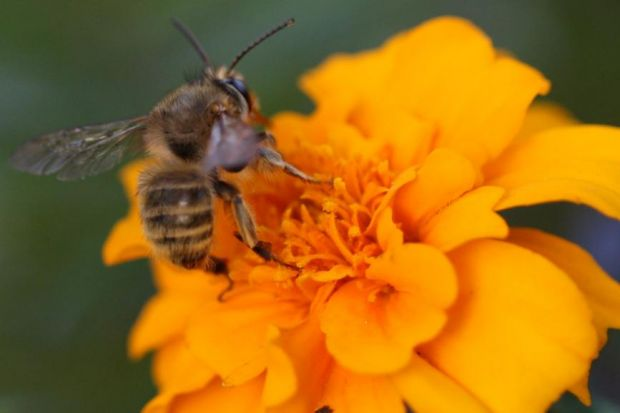 Honeybee hives are being lost every year in the US; a million colonies a year are lost in France, Germany, Italy and the UK